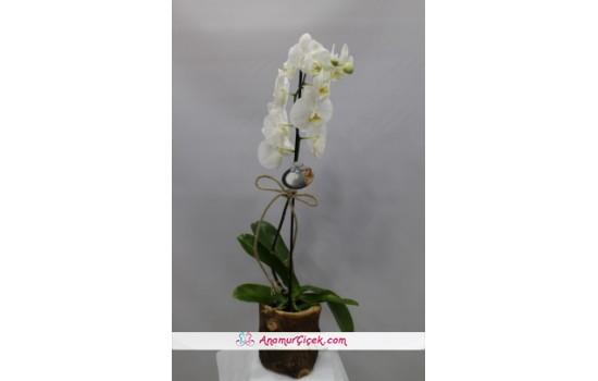 Tek Dal Orkide -2