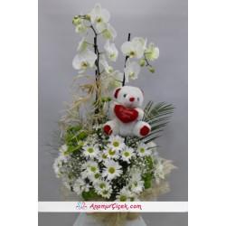 Papatya Orkide Ayıcıklı