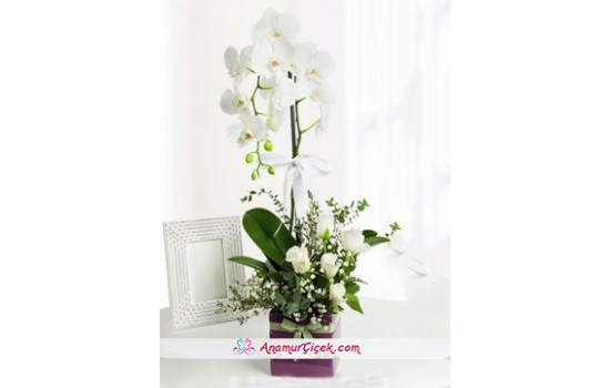 Orkide ve Beyaz Güller -2